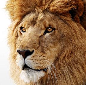 MacOS Lion – warum ich Apple den Rücken kehre